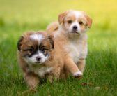 Cómo educar a tu cachorro, asesoramiento del auxiliar al cliente (II)