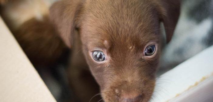 ¿En qué se fija un propietario antes de adquirir un perro?