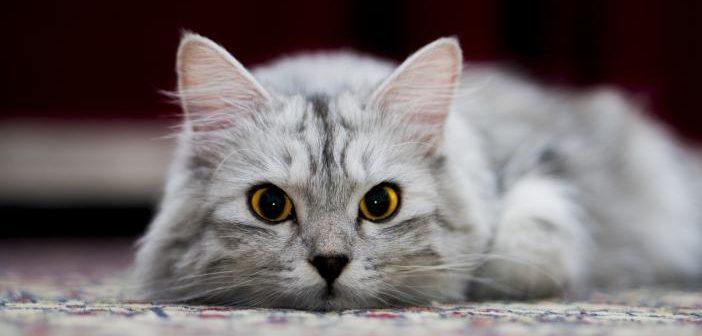 Los gatos reconocen su nombre
