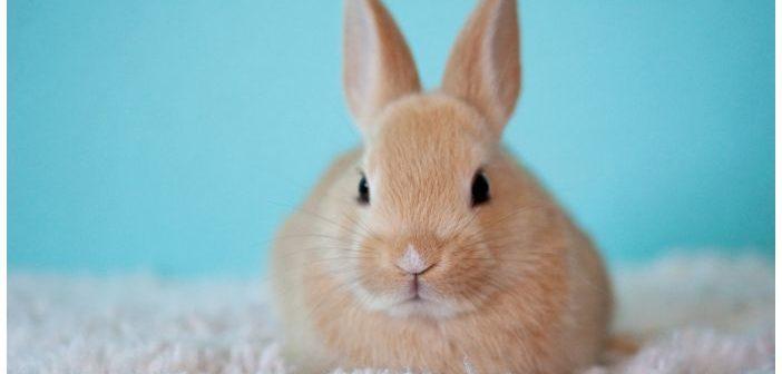 Síndrome vestibular en conejos