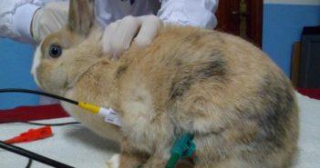 Conejo electrodos