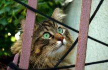 vocalizaciones gatos