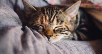 Los gatos entienden la mirada humana