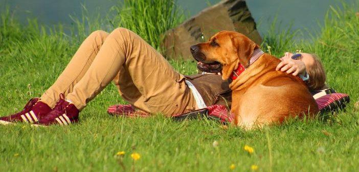 Los niveles de estrés se sincronizan entre perros y propietarios