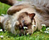 ¿Recibe suficiente información el propietario de un gato diabético?