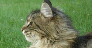 ¿En qué se basan las preferencias alimenticias de los gatos?