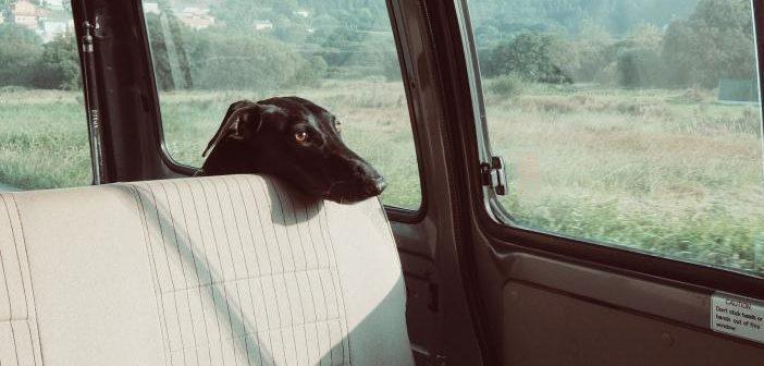 Viajar seguro con la mascota