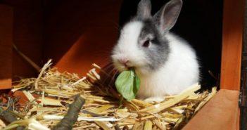 Problemas dentales en conejos