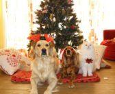 Tenencia responsable en Navidad