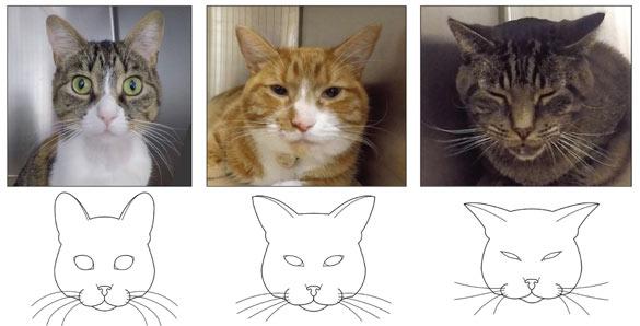 ¿Sabes reconocer las expresiones de dolor en los gatos?