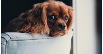 El comportamiento de los animales en tiempos de crisis