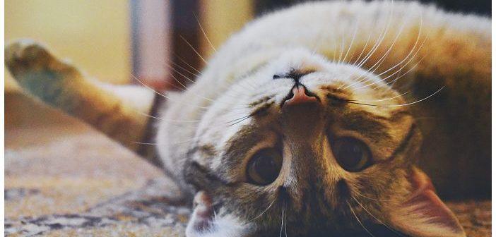Tratamiento de la obesidad en mascotas