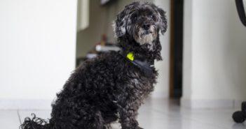 Funciones del ATV en el diagnóstico de la dermatitis atópica canina