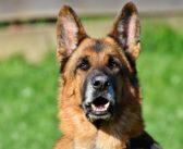 Nutrición del paciente geriátrico canino