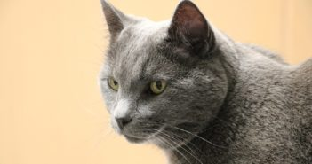 El cuidado de las mascotas geriátricas: consejos prácticos para propietarios