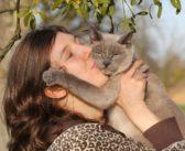 Los gatos ronronean cuando están contentos, ¿mito o realidad?