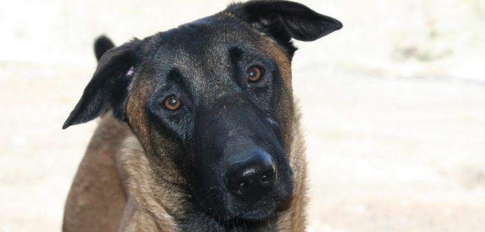 Confirmado un caso de rabia en un perro de Ceuta